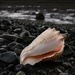 Shell on the shore by theredcamera