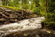 15th Jun 2020 - Snyder Creek in Glacier Park