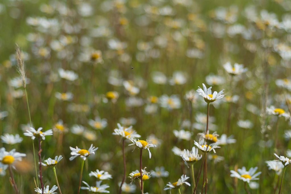 Through the flowers by rumpelstiltskin