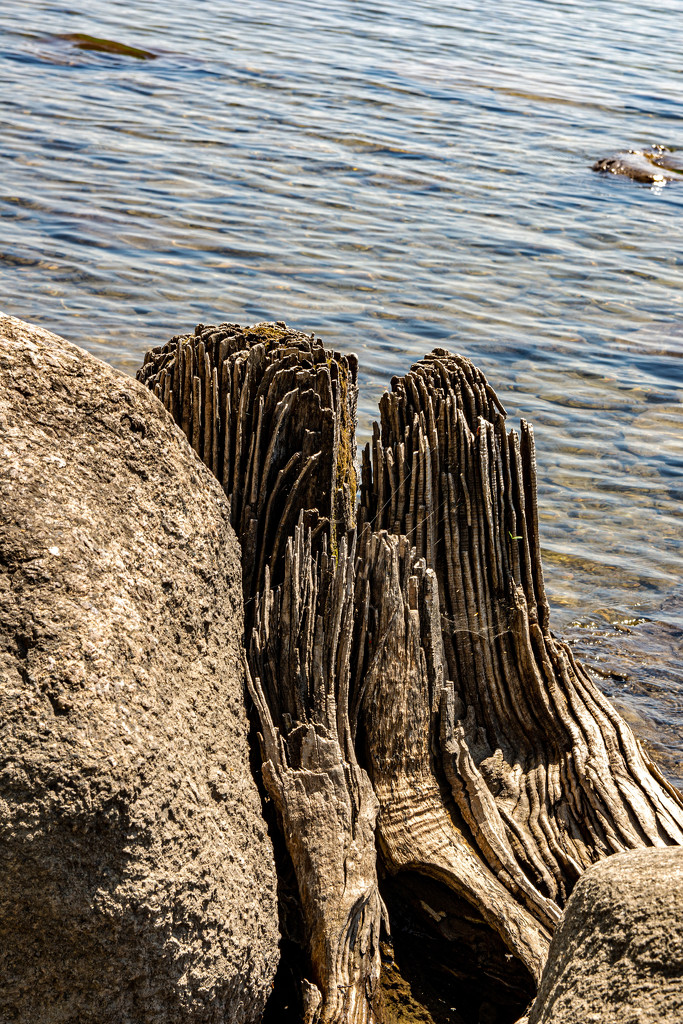 Stumping Around the St. Lawrence River by thedarkroom