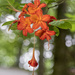 Native Azalea by kvphoto