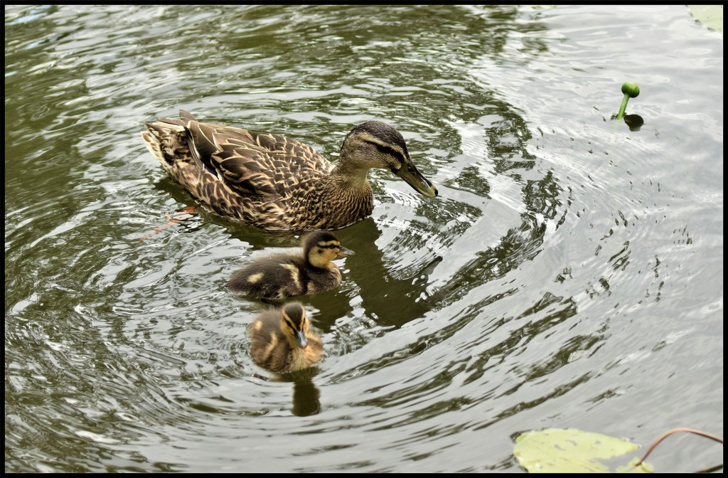 DSC_2540 Out with the little ones by rosiekind