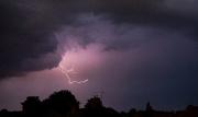 13th Jun 2020 - Quick as lightning