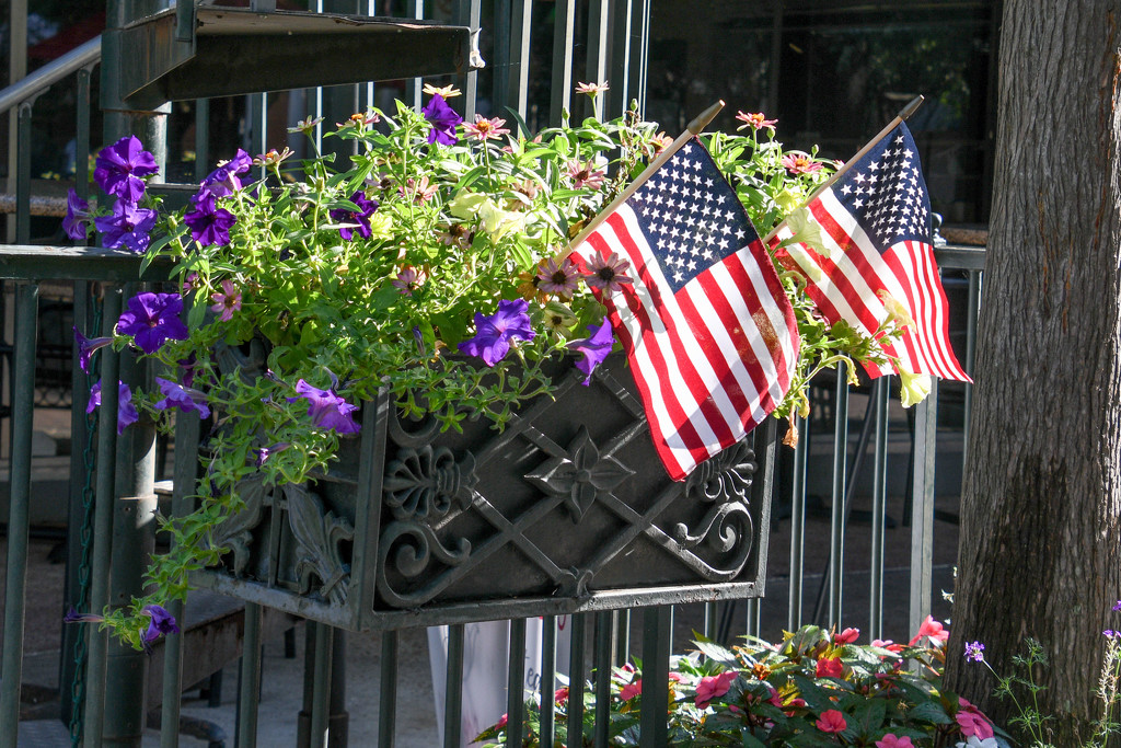 Flag Day by danette