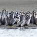 Crowded island - incoming tide! by maureenpp