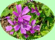16th Jun 2020 - Wildflowers