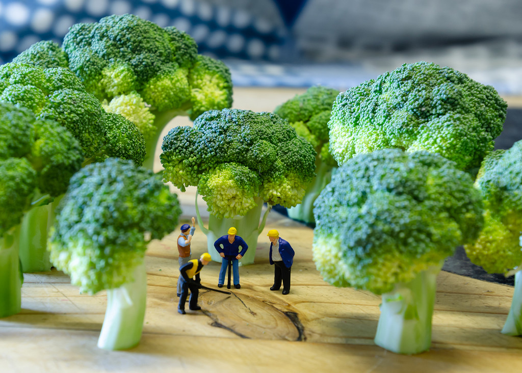 In the Broccoli Forest by salza