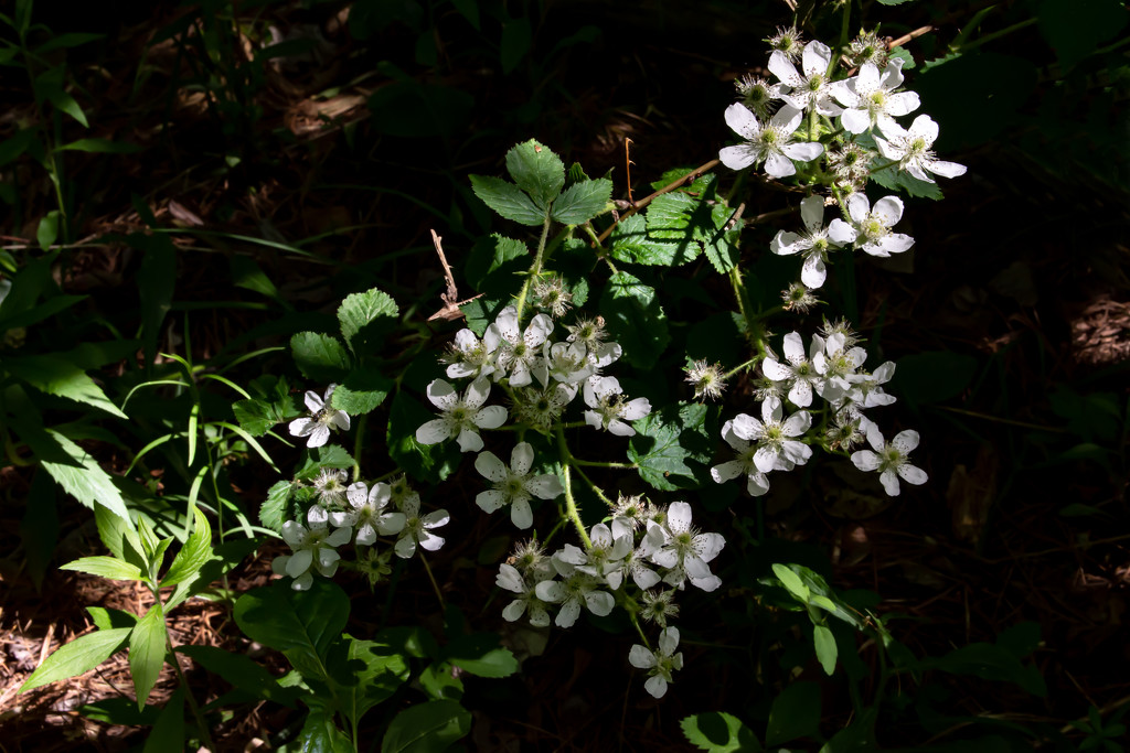 Wild Flowers Caught in the Light by farmreporter