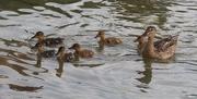 16th Jun 2020 - Family swim