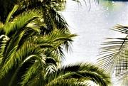 17th Jun 2020 - Palms
