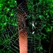 Spider and his or her home. by sailingmusic