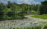 16th Jun 2020 - River of Lily Pads