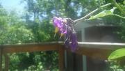 17th Jun 2020 - More Little Purple Flowers