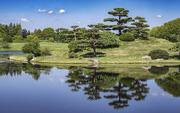 17th Jun 2020 - Garden Reflections