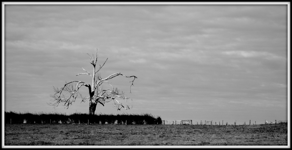 The old tree by dide