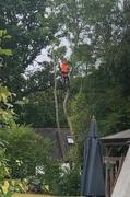18th Jun 2020 - Man up a tree!