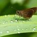Rain dance by dutchothotmailcom