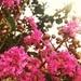 Friday Night Flowers by kaylynn2150