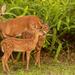 Deer in My Backyard! by rickster549
