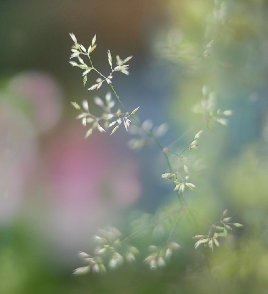 Summer garden by inthecloud5