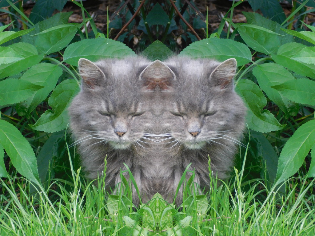 Double cat??? Spooky eh? No PhotoShop involved in the making of this!  by 365anne