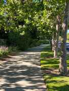 20th Jun 2020 - Shady Path