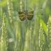 Hiding in the wheat by fayefaye