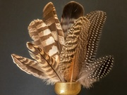 21st Jun 2020 - A collection of Feathers