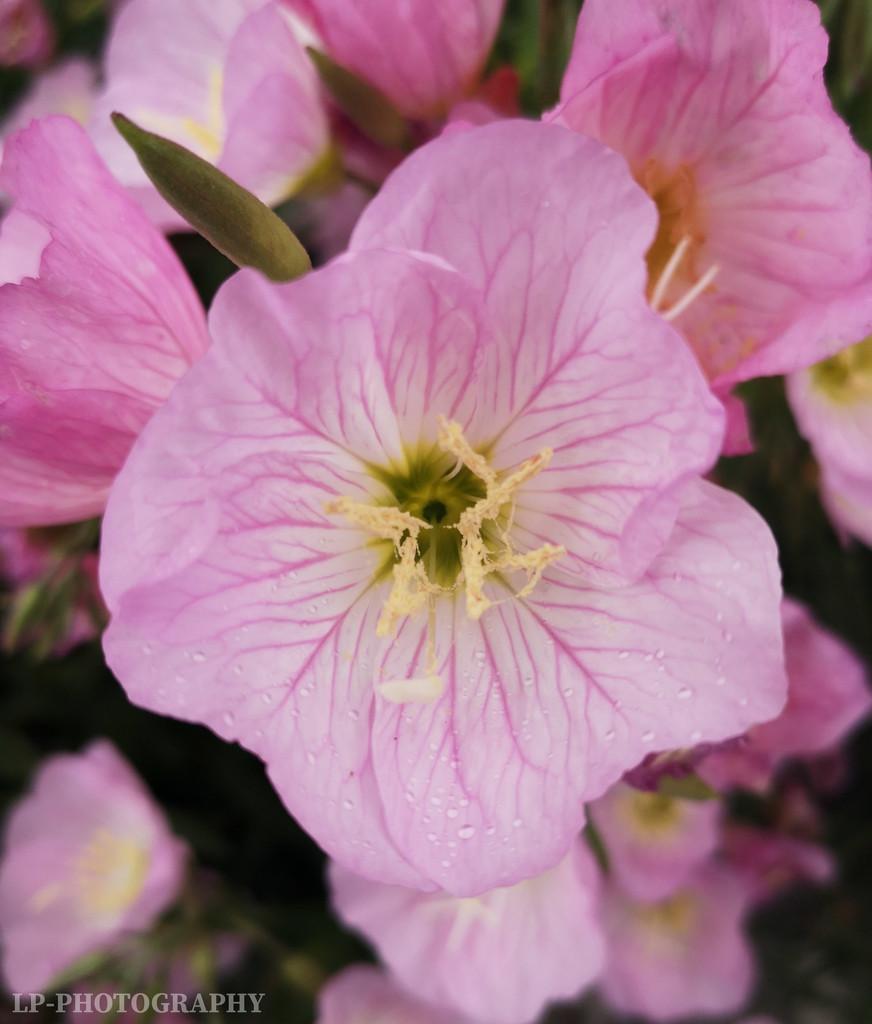 Beautiful Flowers by tiredpanda