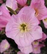 21st Jun 2020 - Beautiful Flowers