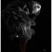 Grooming...    (Best on black) by sdutoit