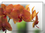 21st Jun 2020 - Orchids at Close Range