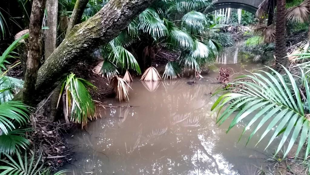 Lush sub-tropical bush Taniwha by 777margo