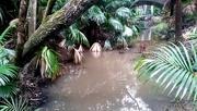 22nd Jun 2020 - Lush sub-tropical bush Taniwha