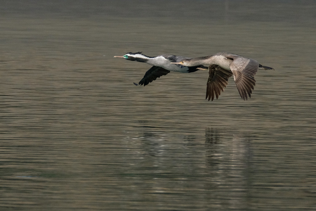 Flying downstream by maureenpp