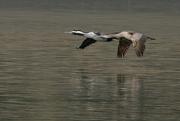 22nd Jun 2020 - Flying downstream