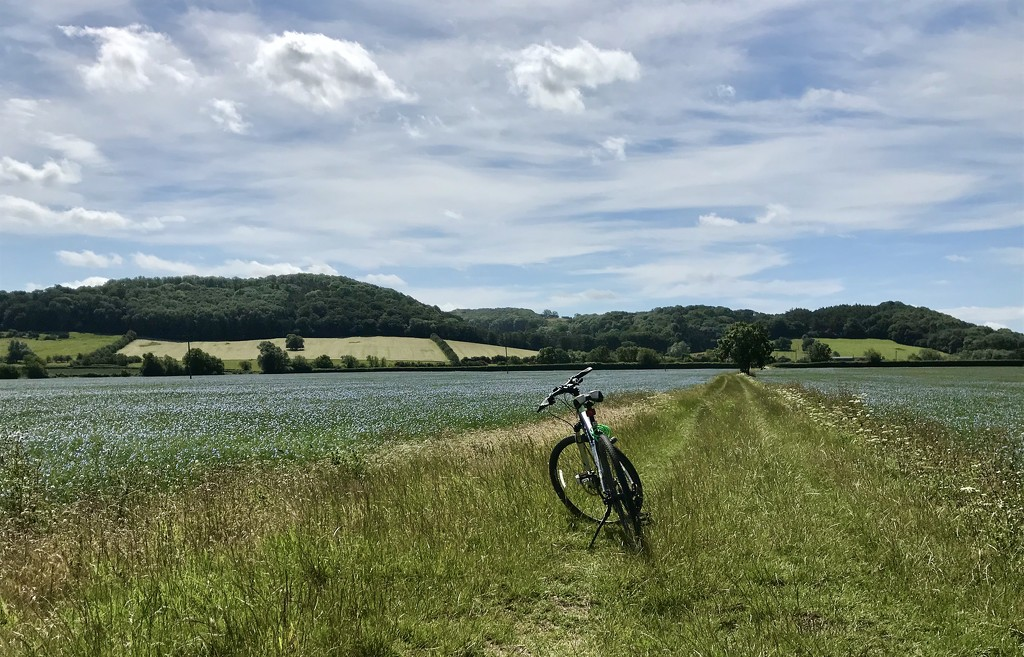 Cycling the linseed trail  by photopedlar