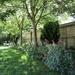My Garden June 2020