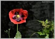 22nd Jun 2020 - RK3_9435 I love wild flowers