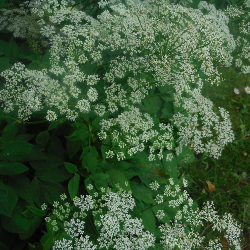 Flowers or Weeds? by spanishliz