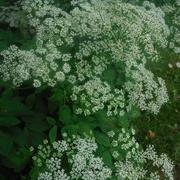 22nd Jun 2020 - Flowers or Weeds?