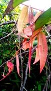 23rd Jun 2020 - Delicate leaves