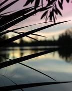 22nd Jun 2020 - Wolf Lake Park