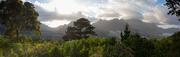 23rd Jun 2020 - Hout Bay, Cape Town