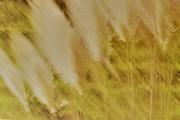 24th Jun 2020 - Toitoi dry glass