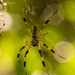 Big Ugly Spider! by rickster549