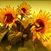 More sunflowers by dide