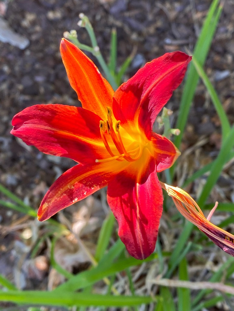 Lily on the walk by shutterbug49