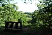 22nd Jun 2020 - 22nd June Winkworth Arboretum