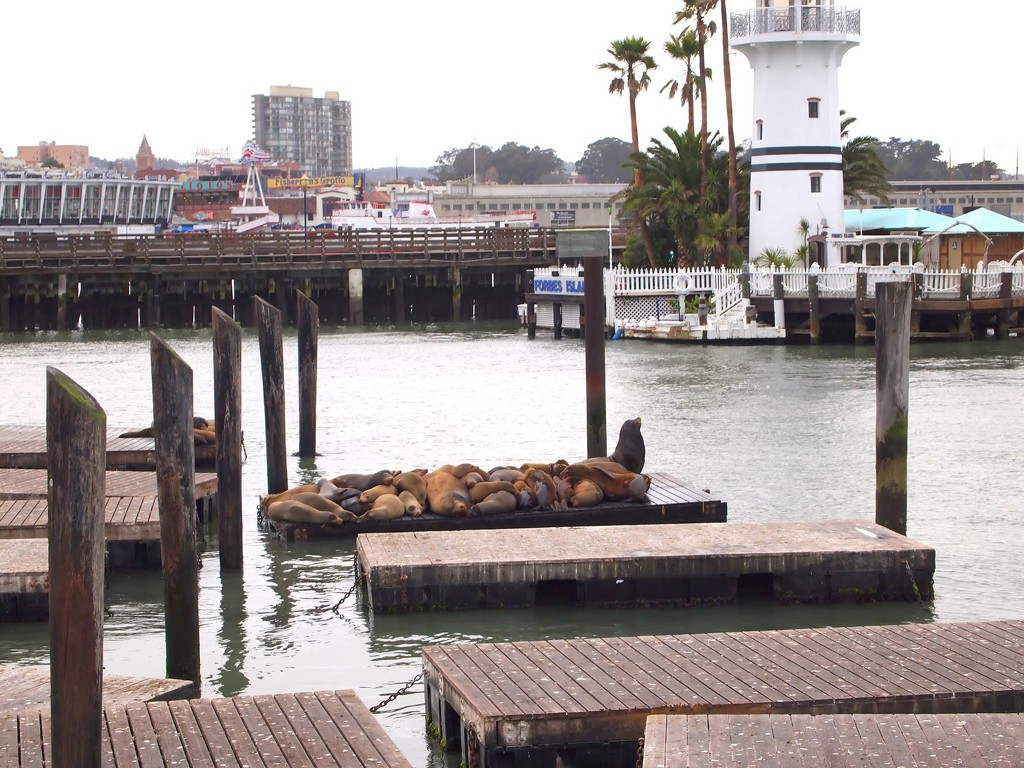Pier 39 by blueberry1222